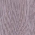 Габсбурский дуб